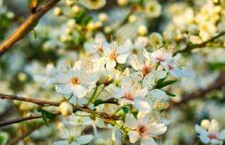 春がきた(上井)