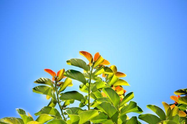 leaves-241701_960_720