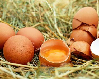 卵の知られざる新常識?!【美髪効果もあり♪】