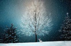 冬の楽しみ♪【武内】