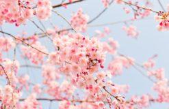 朝から歌舞伎町を散策♪【佐藤】