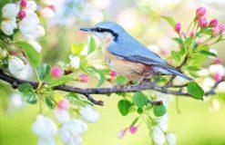 春ですね〜(小山)