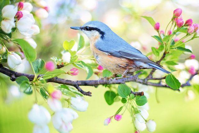 spring-bird-2295431__480