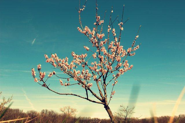 tree-2247128_960_720