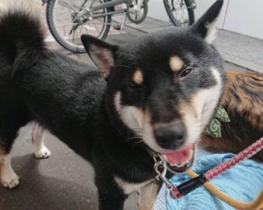 セラピー犬にたっぷり癒されました♪【松沢】