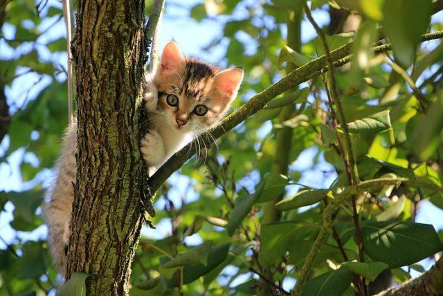 cat-1647775__480