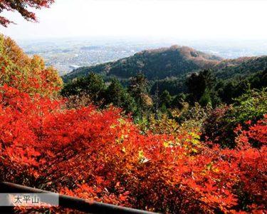 秋の気配  【前田】