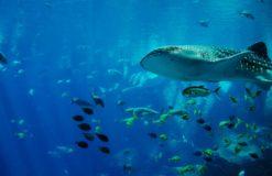 コロコロアザラシと巨大ジンベイザメで海遊館を満喫♪【椎名】