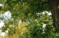 短い秋! 【奈良】