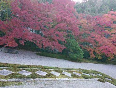 京都に紅葉を見に行ってきました。【奈良】