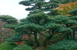 京都シリーズパート2 【奈良】
