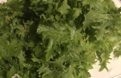 最近出会った野菜!!【石川】