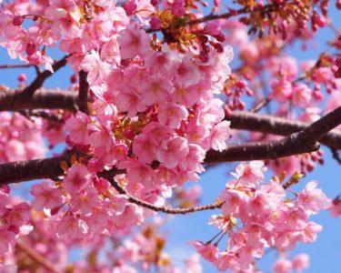 お花がきれいな季節ですね【浅野】