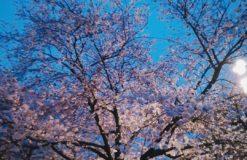 鶴見緑地でお花見してきました!!【眞田】