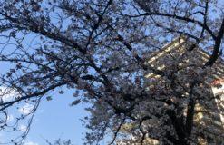 お花見してきました!!【石川】