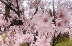 リフレッシュ旅行で長野へ行ってきました。【渡辺】