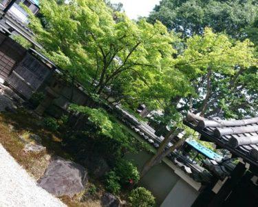 プラーっと京都へ行きました!!!【奈良】