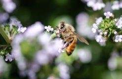 ハチが怖い(山下)