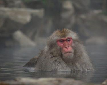 足湯に浸かって…夏のお出かけ日記【内山】