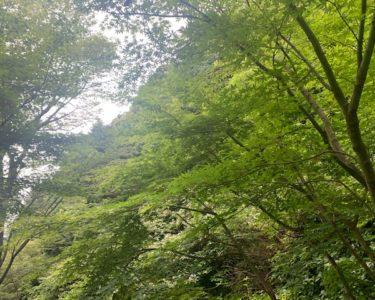 たまには自然のある所で癒しを【水森】