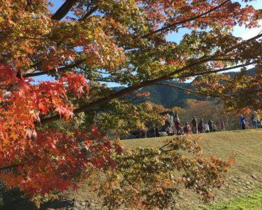 ならだけに、奈良に紅葉探索!!【笑】 【奈良】