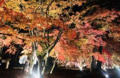 ☆紅葉が綺麗な秩父に行ってきました~*\(^o^)/*☆【木口】