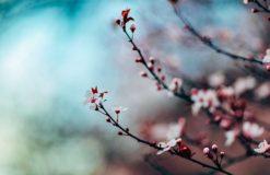 東京都内、桜のオススメ情報です!東京都渋谷区恵比寿の口コミナンバーワン♪