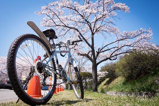 cherry-blossom-1716757__340