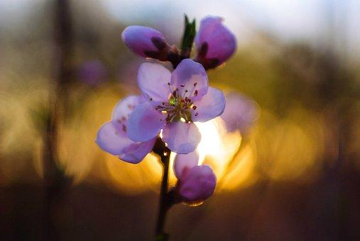 flowers-1760635__340