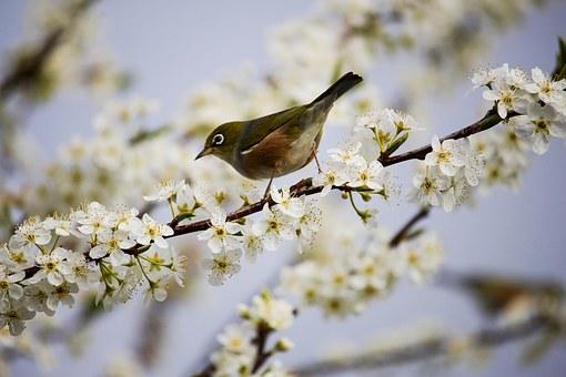 blossom-1324088__340