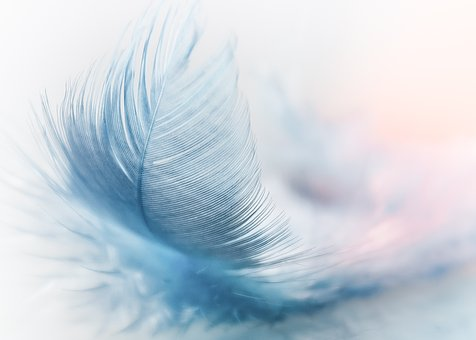 feather-3010848__340