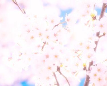 美味しい春【南】