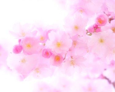 〜春の癒やし〜【南】