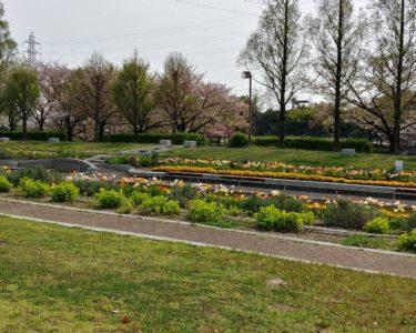 お天気がいいので荒子川公園にて【桜】