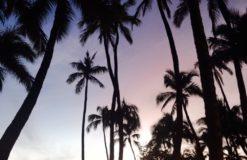 妄想で海外旅行へ(。・ω・。)【木下】