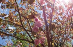自粛直前の春のお出かけ日記~筋肉痛編~【内山】