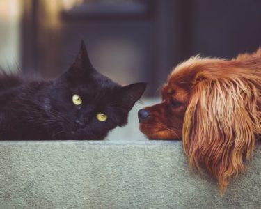 ペットを飼ってる方も大歓迎です!【後藤】