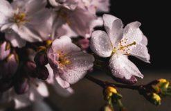 夜桜を楽しみに(小山)