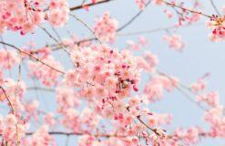 春の気配(^^)/【大久保】