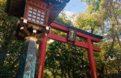 根津神社でお散歩【遠山】